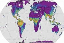 Solar-induced Fluorescence Map. Image: NASA