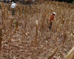 Droughts affecting Latin America