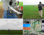 Estimation of the Normalized Differences Vegetation Index of a rice field