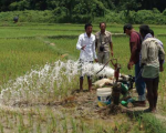 Sustainable use of groundwater during the dry season is crucial for paddy farming in Saptari, Nepal. Image: ICIMOD