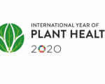 "International Plant Health Conference ""Protecting Plant Health in a changing world"" logo. Image: FAO"