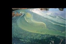 Satellite-based imagery will detect blue-green algae blooms
