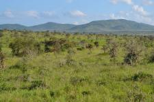 Vegetation in savannas and shrublands helps to offset global deforestation (Image: CT Cooper)