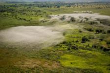 Nube de langostas migratorias malgaches vista desde un helicóptero. Imagen: FAO.