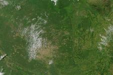Forest observed through satellite imagery (Image: NASA/GSFC)
