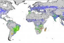 Índice de estrés agrícola. Imagen: FAO.