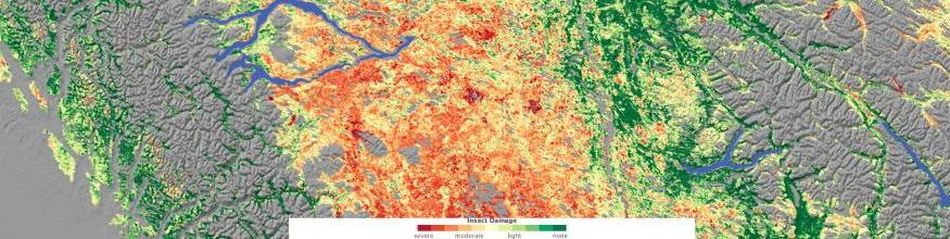 Relying on a variety of data sources, including observations by NASA's Moderate Resolution Imaging Spectroradiometer (MODIS), Jon Ranson and Paul Montesano of NASA's Goddard Space Flight Center conducted a survey of insect-damaged forests in British Columbia. This image shows their assessment of insect damage overlain on a topography map. In this image, red indicates the most severe damage, and green indicates no damage. Gray indicates non-forested areas. Image: NASA.